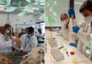 Proxectos: Animal CSI e Investigando as proteínas