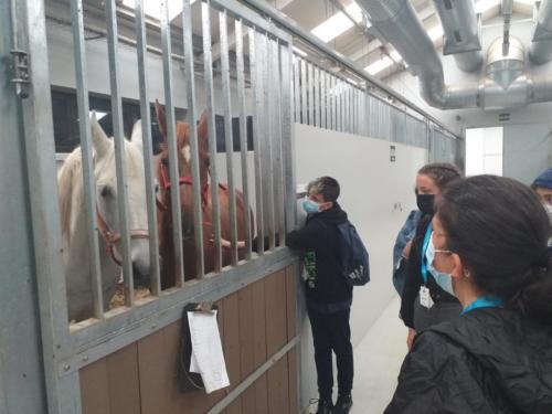 Visita ao Hospital Rof Codina e laboratorio de Habilidades Clínicas en Veterinaria. Moito nos gustan os cabalos.